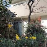 ベラミハウスの庭