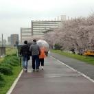 お花見(多摩川緑地にて)
