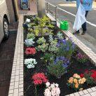碑文谷オフィス前花壇植え付け後の様子
